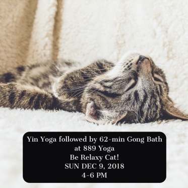 Yin cat